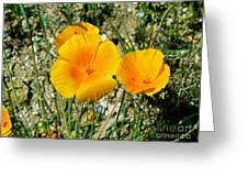 Orange Wildflowers Greeting Card