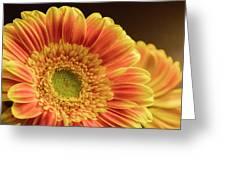Orange Yellow Gerbera Greeting Card