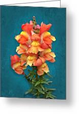 Orange Yellow Snapdragon Flowers Greeting Card