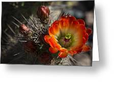 Orange You A Hedgehog  Greeting Card