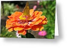 Orange Zennia Greeting Card