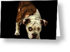 Orangeenglish Bulldog Dog Art - 1368 - Bb Greeting Card