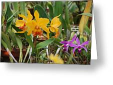 Orangepurple Orchids Greeting Card