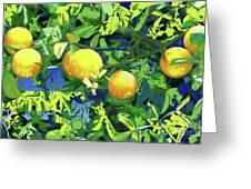 Oranges On Vine IIi Greeting Card