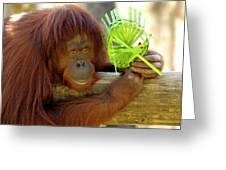 Orangutan Greeting Card by Carolyn Marshall