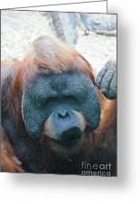 Orangutan Kiss Greeting Card