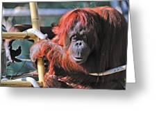 Orangutan Smile Greeting Card