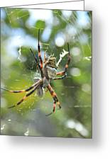 Orb Weaver Spider And Prey In A Web Greeting Card