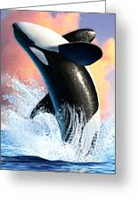Orca 1 Greeting Card