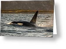 Orca #3 Greeting Card
