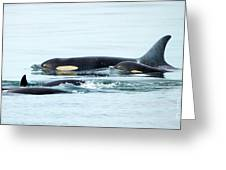 Orca Family Photo Greeting Card
