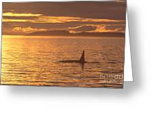 Orca Killer Whale Greeting Card