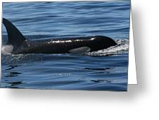 Orca Nw 2011 Greeting Card