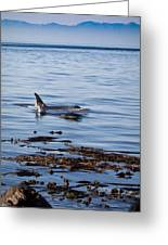 Orca Whales In The San Juan Islands Greeting Card