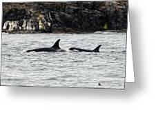 Orcas In The Salish Sea Greeting Card