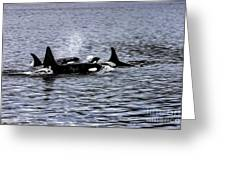 Orcas, The Killer Whales Greeting Card