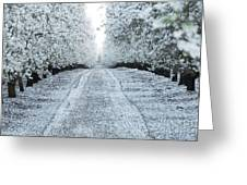 Orchard In White Greeting Card