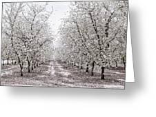 Orchard Lane Greeting Card
