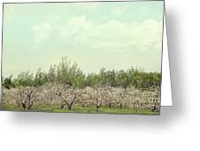 Orchard Of Apple Blossoming Tees Greeting Card