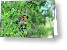 Orchard Oriole Feeding The Kids Greeting Card