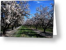 Orchard Trees Blossoming Greeting Card