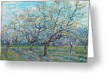 Orchard With Blossoming Plum Trees   Greeting Card