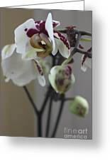 Orchid - 100 Greeting Card