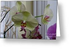 Orchid - 103 Greeting Card