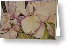 Orchid - Closeup Greeting Card