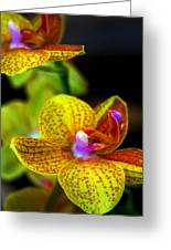 Orchid-0022 Greeting Card
