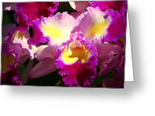 Orchid 1 Greeting Card