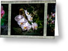 Orchid 1 Triptych Greeting Card