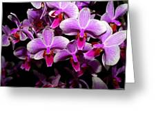 Orchid 12 Greeting Card