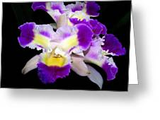 Orchid 13 Greeting Card