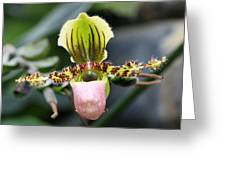 Orchid 15 Greeting Card
