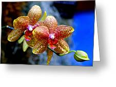 Orchid 17 Greeting Card