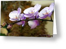 Orchid 18 Greeting Card