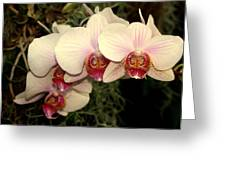 Orchid 19 Greeting Card