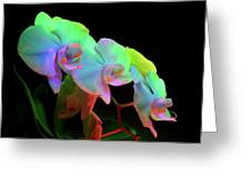 Orchid #2 Greeting Card