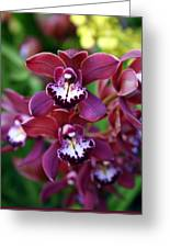 Orchid 20 Greeting Card