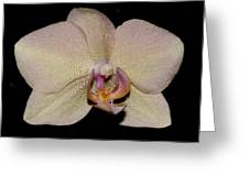 Orchid 2016 2 Greeting Card