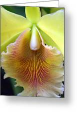 Orchid 21 Greeting Card