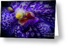 Orchid 2160tg Greeting Card