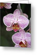 Orchid 22 Greeting Card