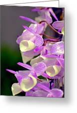 Orchid 25 Greeting Card