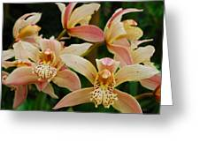 Orchid 255 Greeting Card