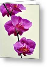 Orchid 26 Greeting Card