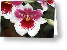 Orchid 3 Greeting Card