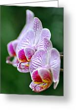 Orchid 30 Greeting Card