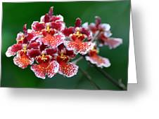 Orchid 31 Greeting Card